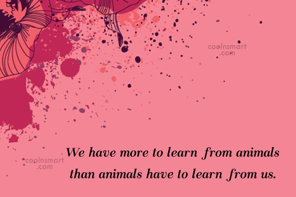 Images Quote: We have more to learn from animals...