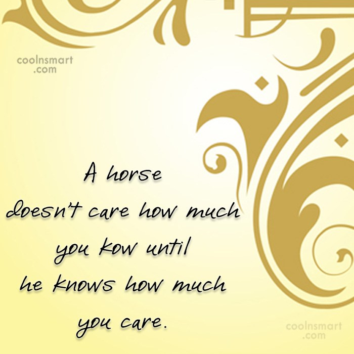Quote: A horse doesn't care how much you...