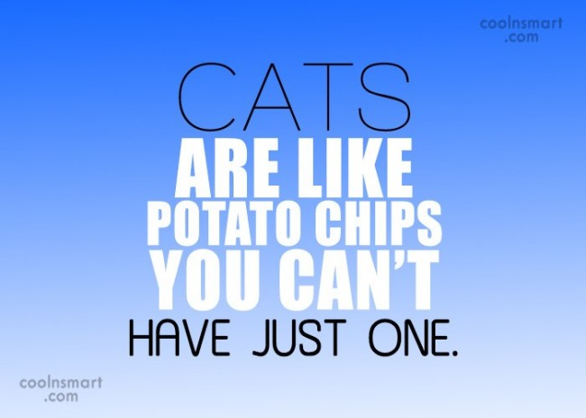 Cats Quote: Cats are like potato chips you can't...
