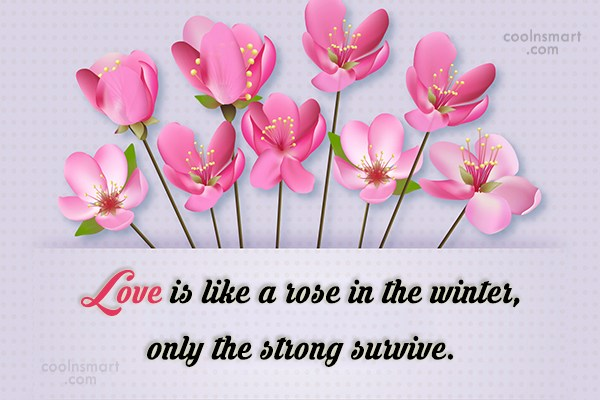 Clever Quote: Love is like a rose in the...