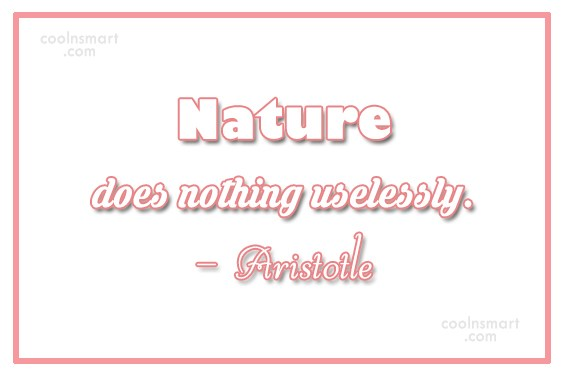 Nature Quote: Nature does nothing uselessly. – Aristotle