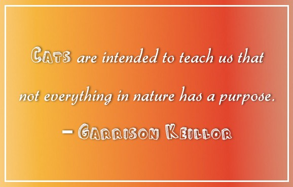 Quote: Cats are intended to teach us that...