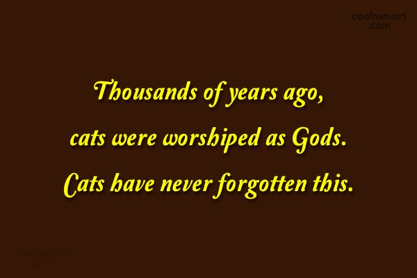 Cats Quote: Thousands of years ago, cats were worshiped...