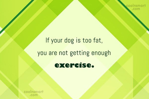 Exercise Quote: If your dog is too fat, you...