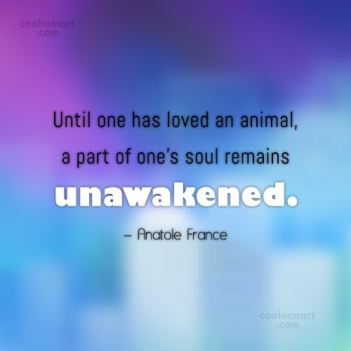 Pets Quote: Until one has loved an animal, a...